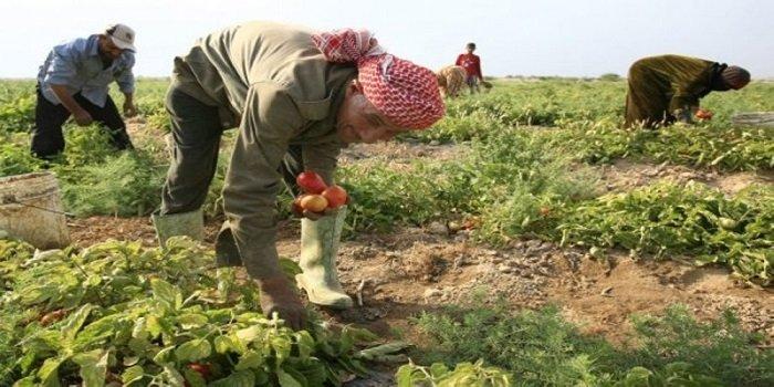 إطلاق الشركة الأردنية-الفلسطينية للتسويق الزراعي