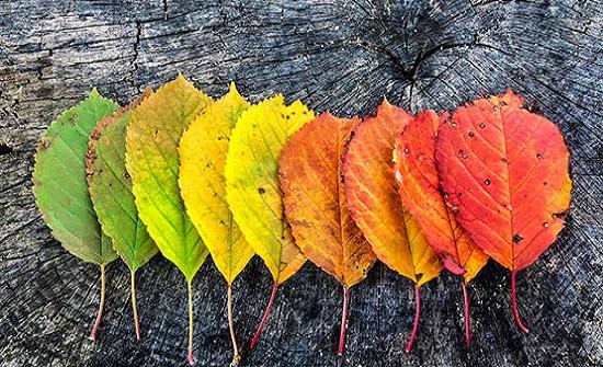 الأربعاء بداية فصل الخريف وأجواء خريفية معتدلة